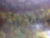 06072010063.jpg
