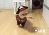 pirate_cat_01.png